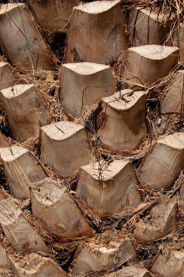 Tronco da palmeira imagem de stock