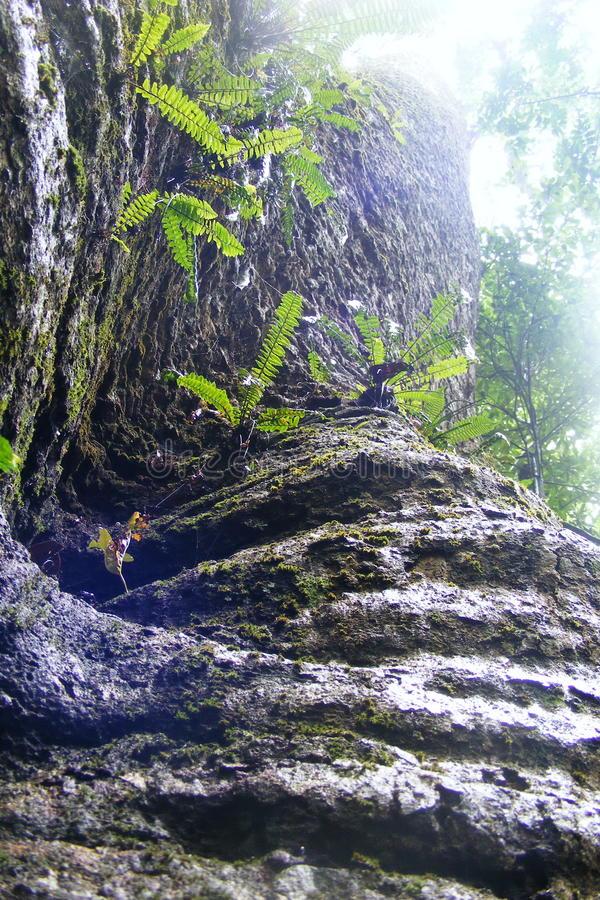 Tronco de árbol foto de archivo libre de regalías