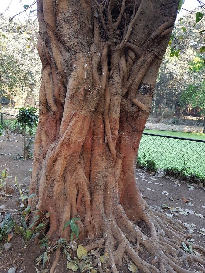 Tronco de árbol imagen de archivo