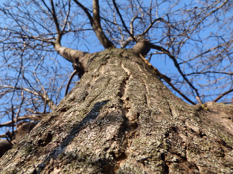 Tronco de árbol fotografía de archivo libre de regalías