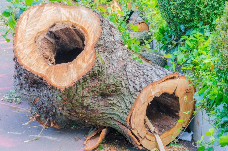 Tronco de árbol ahuecado-hacia fuera foto de archivo