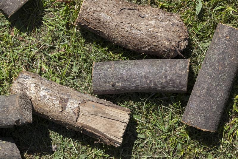 Tronco de árbol aserrado fotografía de archivo