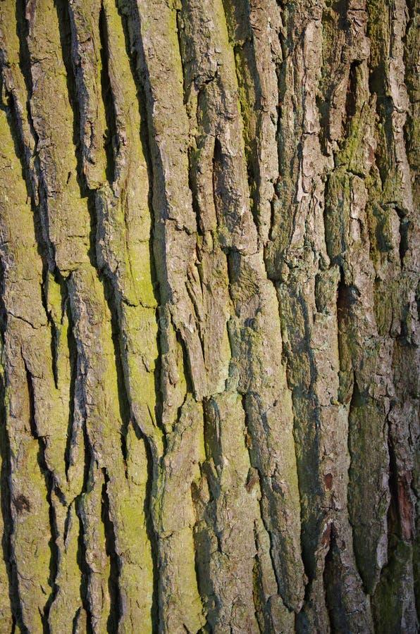 Tronco de árbol background_1 imagen de archivo