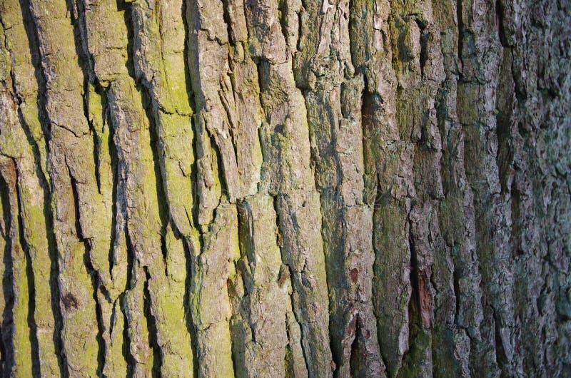 Tronco de árbol background_2 fotos de archivo libres de regalías
