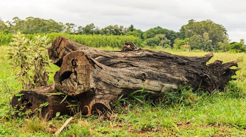 Tronco de árbol caido en la hierba fotos de archivo