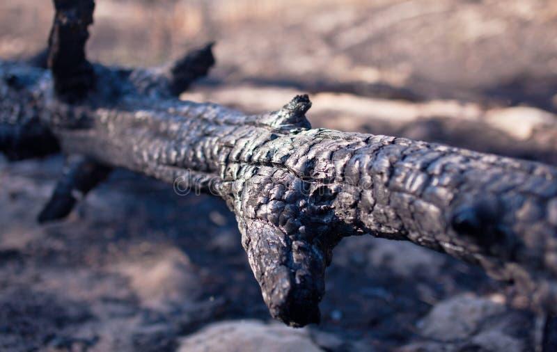Tronco de árbol carbonizado después del fuego imágenes de archivo libres de regalías