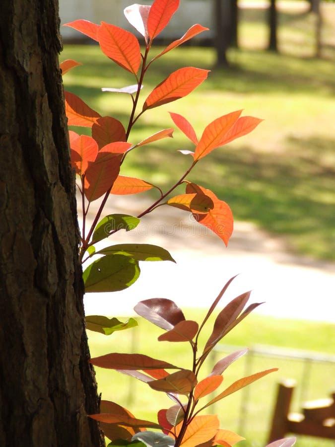 Tronco de árbol con los troncos del ámbar imagen de archivo