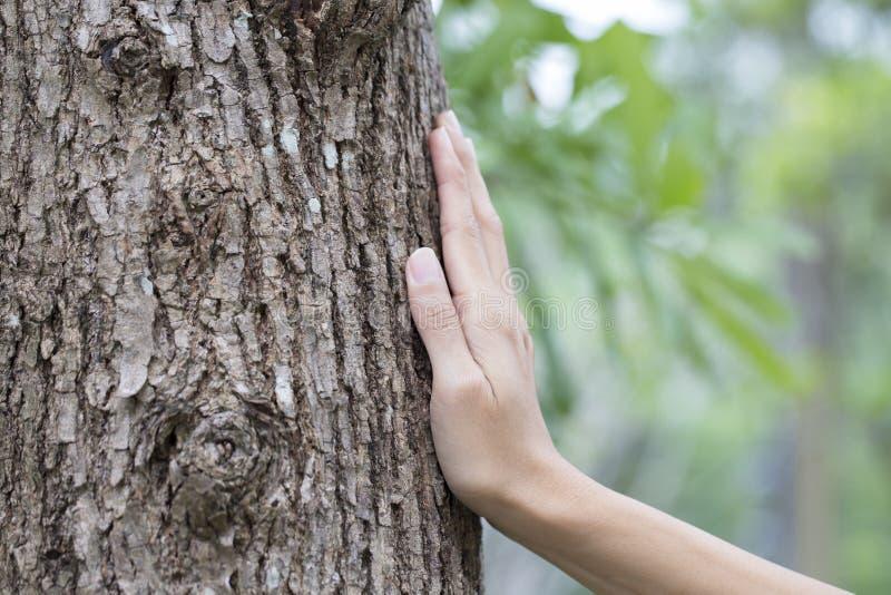Tronco de árbol conmovedor de la mano de la mujer imagen de archivo