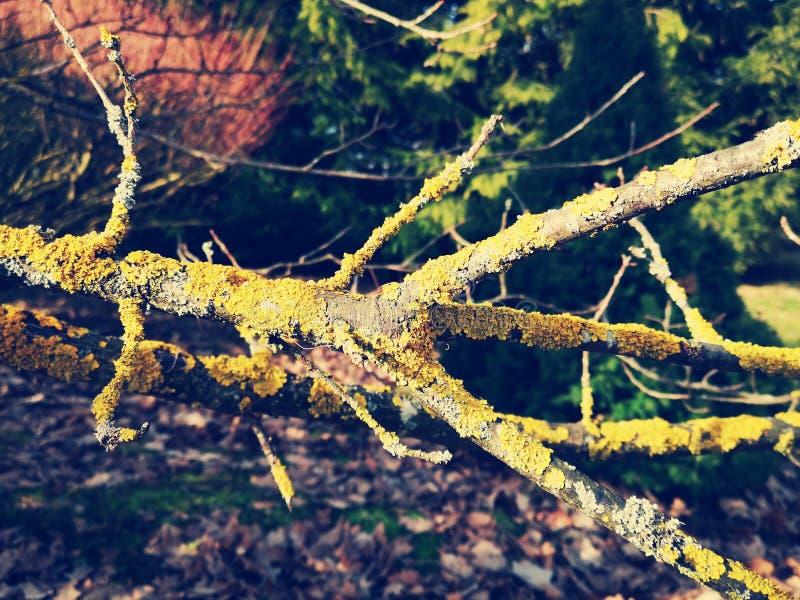 Tronco de árbol cubierto de musgo imagenes de archivo