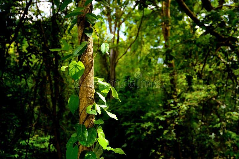 Tronco de árbol en las hojas salvajes y verdes con muchos árbol en el bosque fotografía de archivo