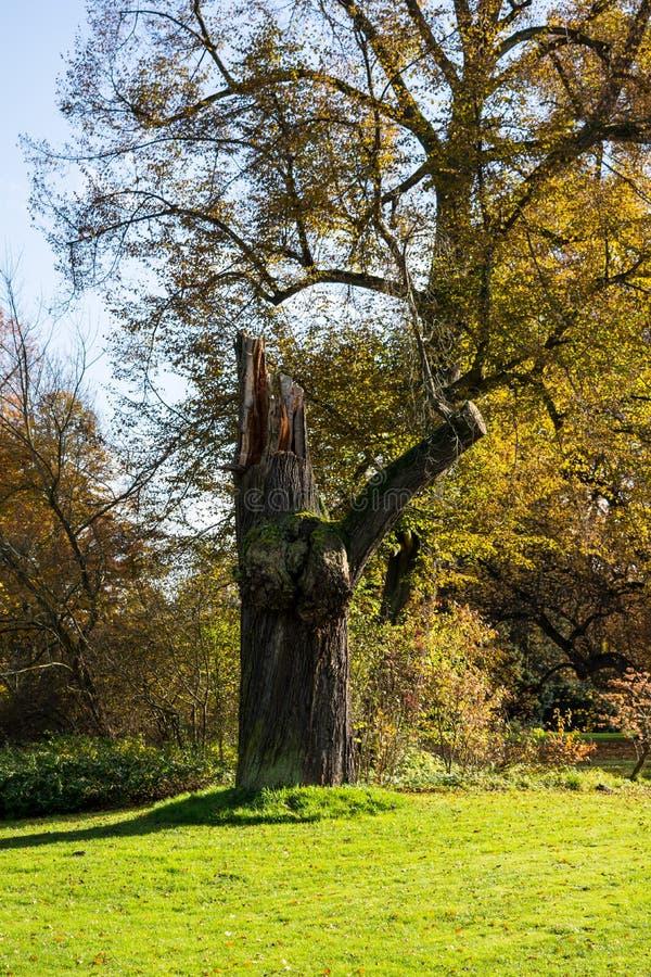 Tronco de árbol en parque de la ciudad foto de archivo libre de regalías