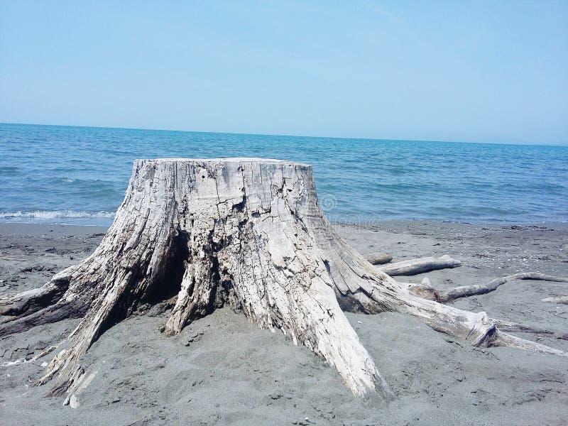 Tronco de árbol en playa fotos de archivo libres de regalías