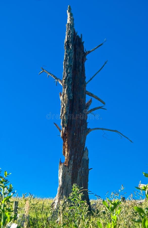 Download Tronco de árbol muerto foto de archivo. Imagen de tronco - 7281878