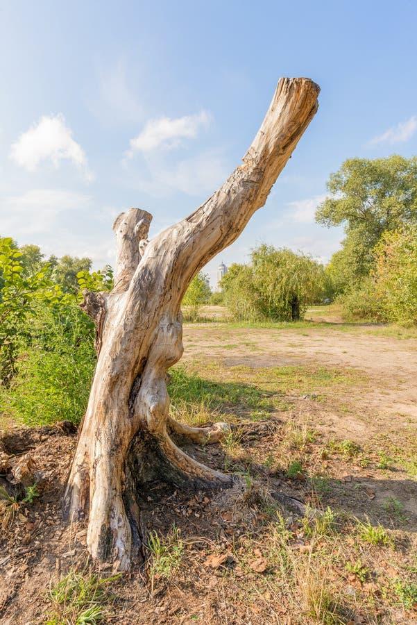 Tronco de árbol pelado imagen de archivo libre de regalías