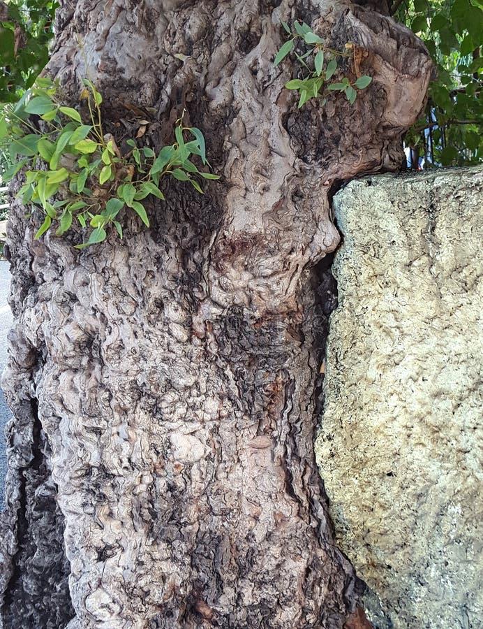 Tronco de árbol que destruye un panel concreto de la cerca durante un tiempo fotografía de archivo
