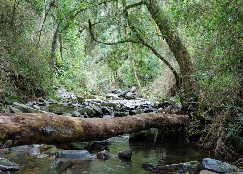 Tronco de árbol sobre secuencia en bosque tropical fotos de archivo libres de regalías