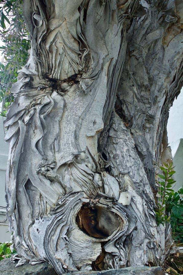 Tronco de árbol triste de la cara imagenes de archivo