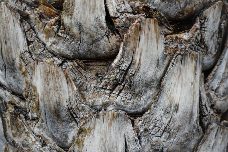 Tronco de árbol tropical del fondo del extracto imágenes de archivo libres de regalías