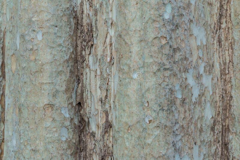 Tronco de árbol Uso de mayo como fondo primer imagen de archivo