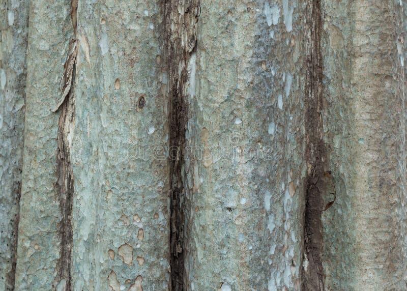 Tronco de árbol Uso de mayo como fondo primer foto de archivo libre de regalías