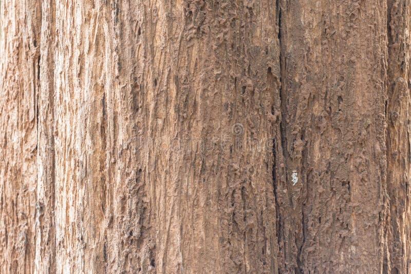 Tronco de árbol Uso de mayo como fondo primer foto de archivo