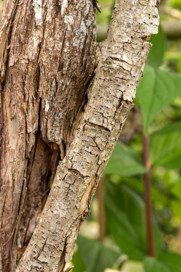 Tronco de árbol y su rama diagonal imagenes de archivo