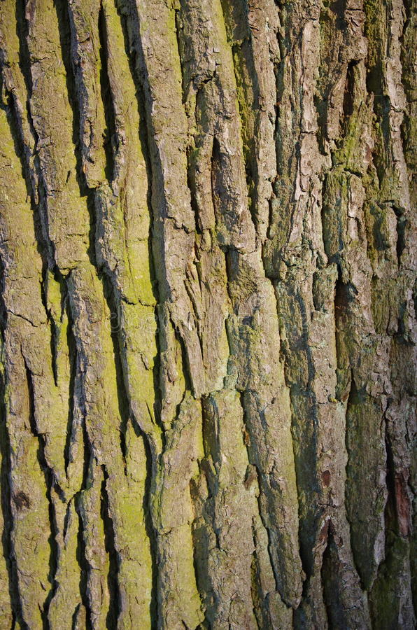 Tronco de árvore background_1 imagem de stock