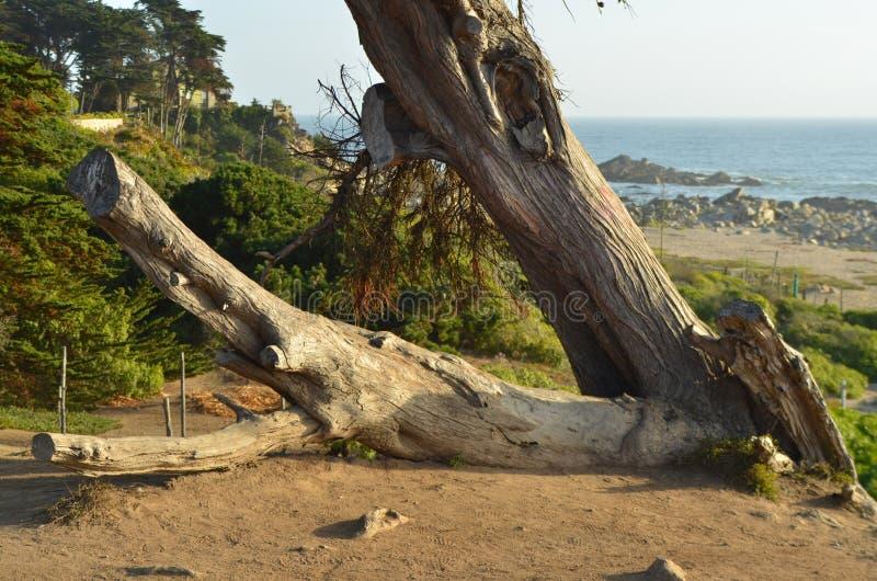 Tronco de árvore caído foto de stock royalty free