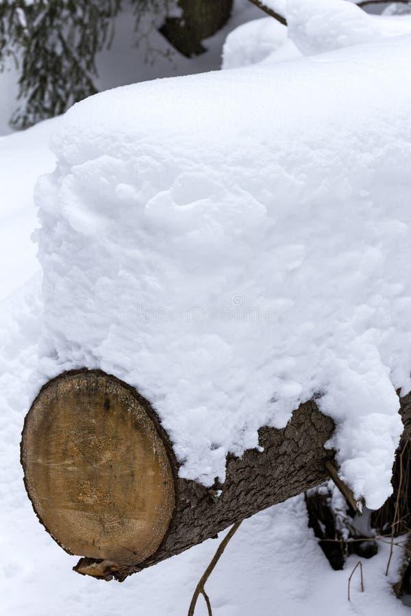 Tronco de árvore coberto com a neve fresca no inverno imagens de stock
