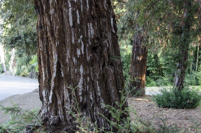 Tronco de árvore com casca interessante imagens de stock royalty free
