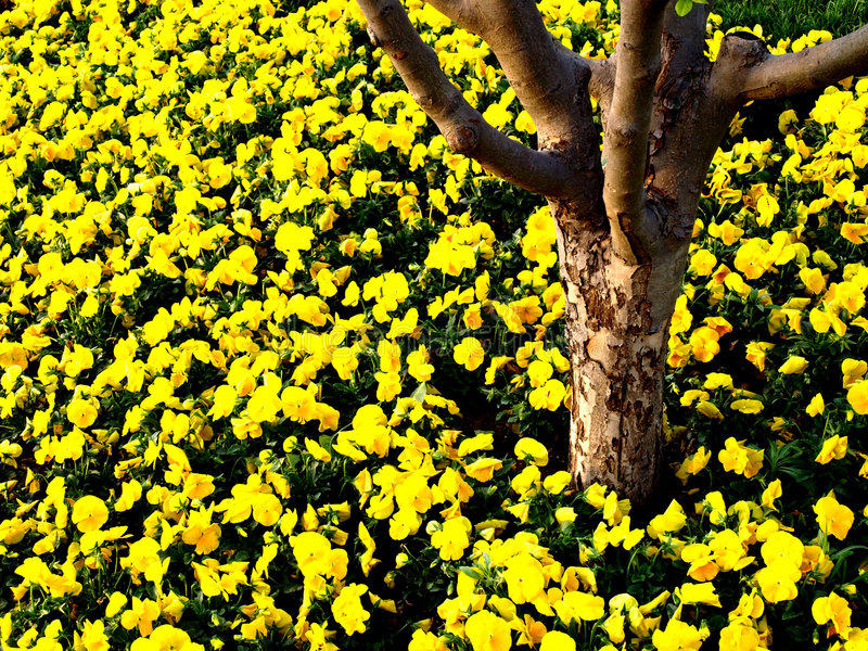 Tronco De árvore Com Flores Amarelas Imagem de Stock Royalty Free
