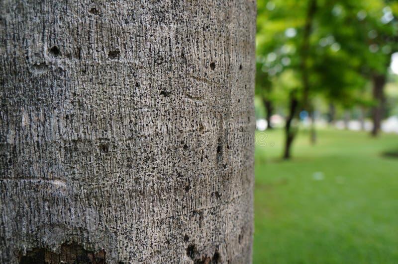 Tronco de árvore com fundo borrado fotos de stock royalty free