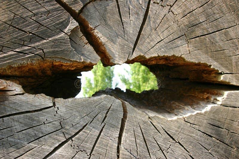 Tronco de árvore com furo foto de stock royalty free