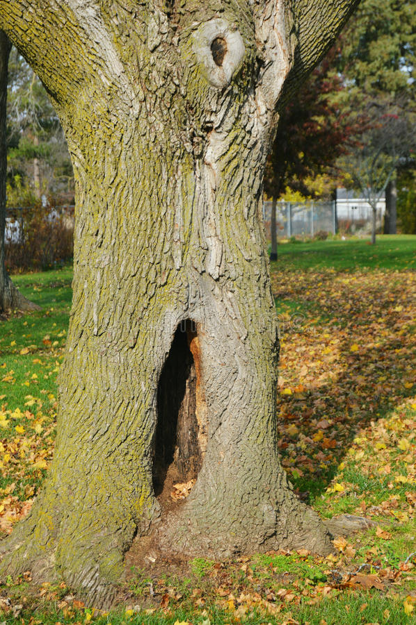 Tronco de árvore com furo imagem de stock