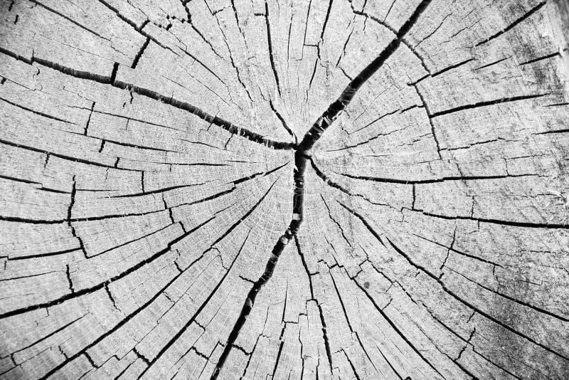Tronco de árvore de madeira do corte da textura fotografia de stock