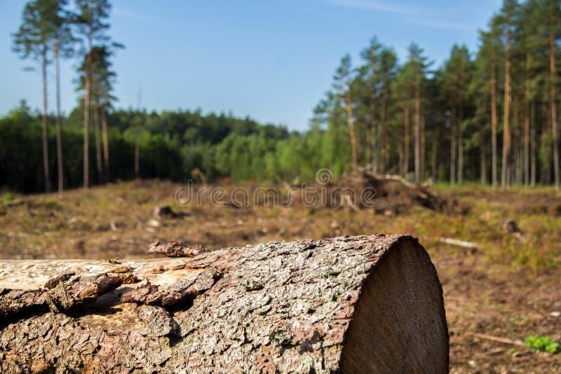 Tronco de árvore em uma floresta imagem de stock royalty free