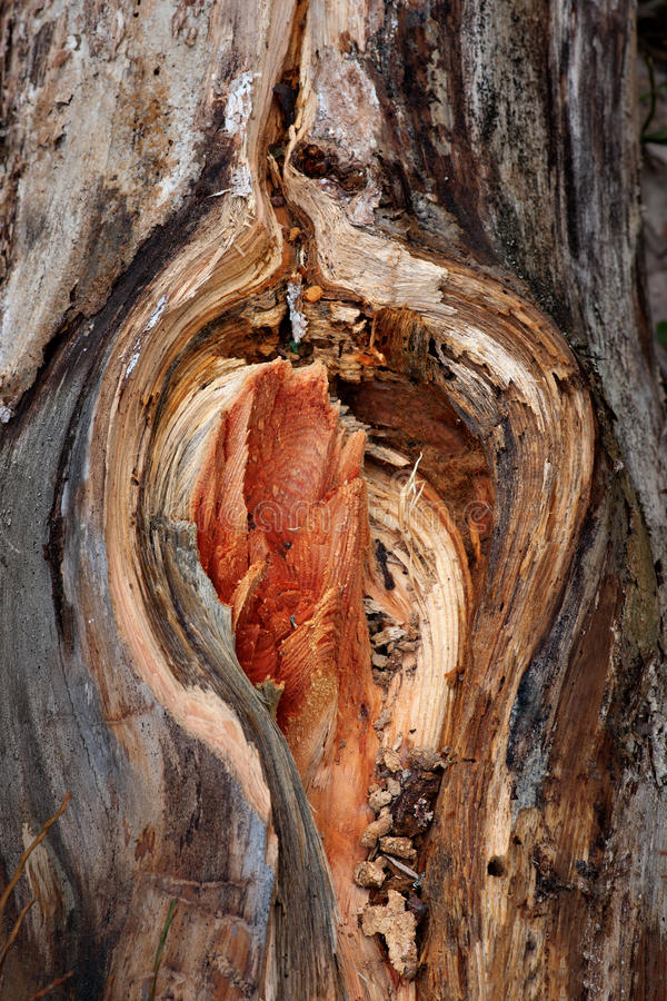 Tronco de árvore ferido imagens de stock