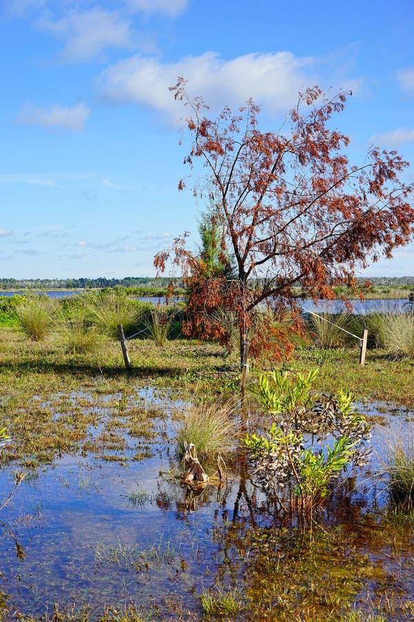 Download Tronco de árvore na lagoa foto de stock. Imagem de jacaré - 80100094