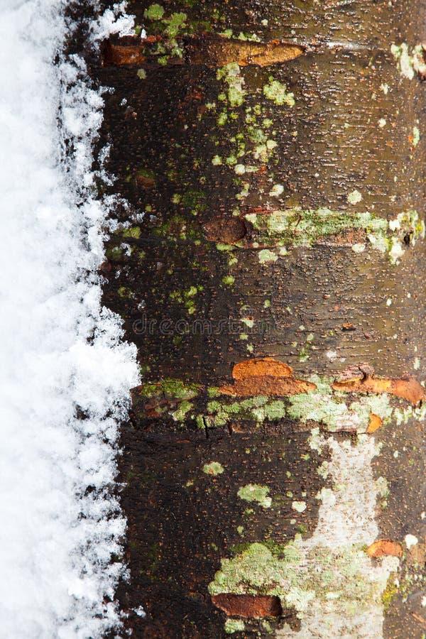 Tronco de árvore no inverno com neve fotografia de stock royalty free