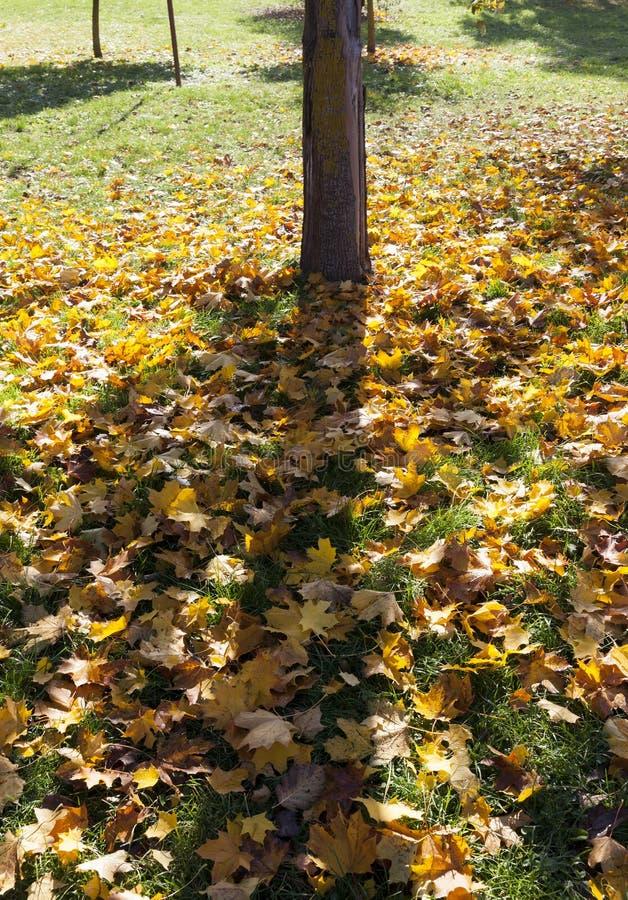 Tronco de árvore no outono fotos de stock