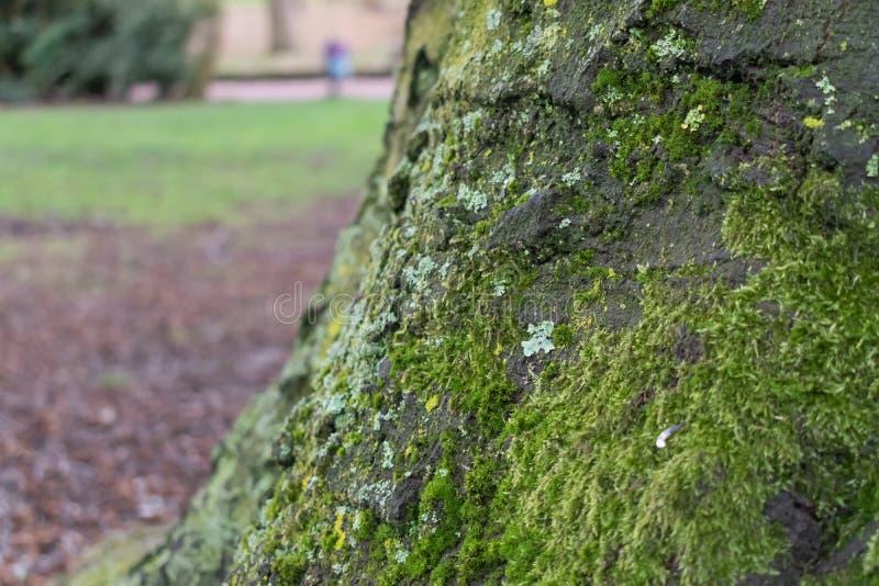 Tronco de árvore no parque com profundidade fotos de stock royalty free