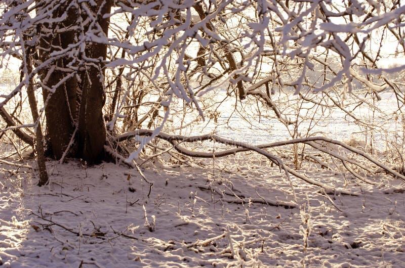 Tronco de árvore no parque nevado, fundo da natureza do inverno fotografia de stock royalty free