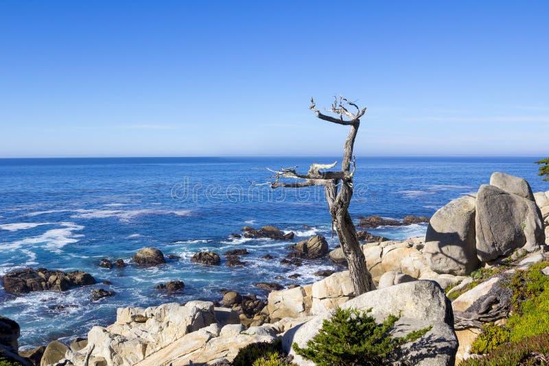 Tronco de árvore solitário na movimentação de 17 milhas imagens de stock