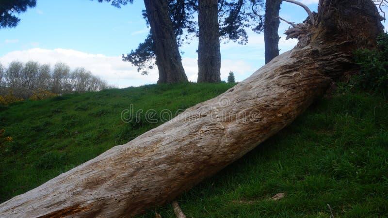 Tronco de árvore velho rotting na exploração agrícola imagem de stock