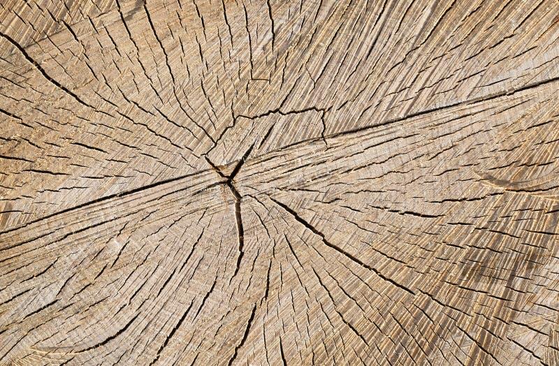 tronco de árvore visto do vidoeiro foto de stock royalty free
