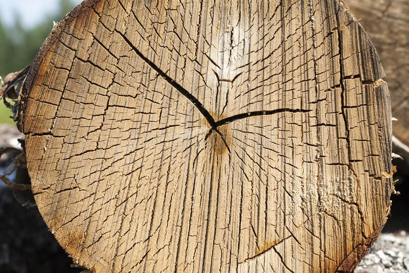 tronco de árvore visto do vidoeiro imagem de stock royalty free