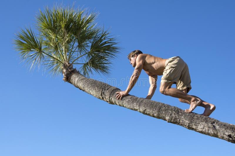 Tronco de escalada do homem muscular da palmeira fotografia de stock royalty free