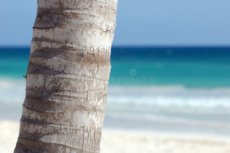 Tronco de la palmera imagen de archivo libre de regalías