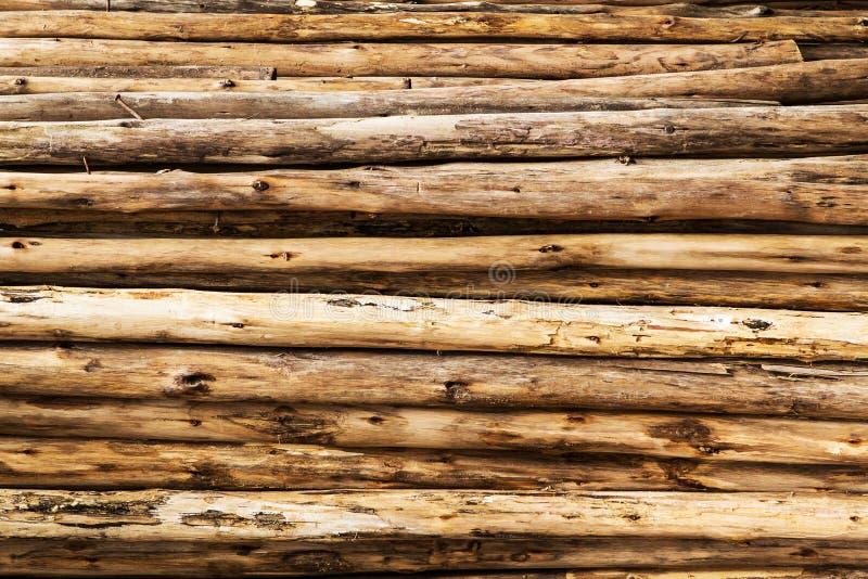 Tronco de la textura del árbol de eucalipto fotos de archivo libres de regalías