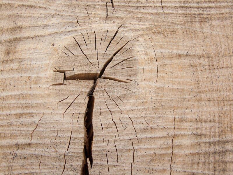 Tronco de madeira imagem de stock